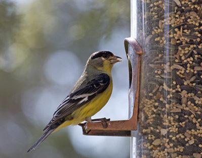 Simple DIY Bird Feeders Aging Adults
