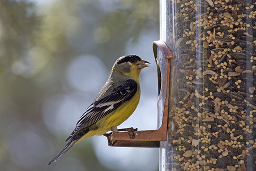 5 Simple DIY Bird Feeders Aging Adults Can Create in Lincoln, CA